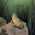 Single Trout by Donna Tucker