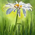 Single White Daisy  by Sharon Freeman