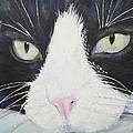 Sissi The Cat 2 by Raija Merila