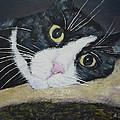 Sissi The Cat 3 by Raija Merila