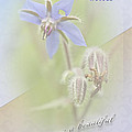 Sister Birthday Greeting Card - Borage - Borage Officinalis by Mother Nature