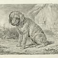 Sitting Dog In A Barn, Johannes Mock by Johannes Mock