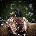 Sitting Duck by Charlie Cliques
