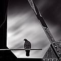 Sitting On A Stick by Bob Orsillo