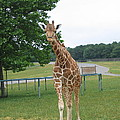 Six Flags Great Adventure - Animal Park - 121244 by DC Photographer