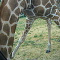 Six Flags Great Adventure - Animal Park - 121245 by DC Photographer
