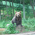 Six Flags Great Adventure - Animal Park - 121263 by DC Photographer