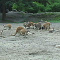 Six Flags Great Adventure - Animal Park - 121270 by DC Photographer