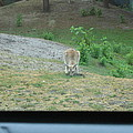 Six Flags Great Adventure - Animal Park - 121272 by DC Photographer