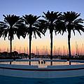 Six Palms by David Lee Thompson