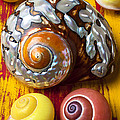 Six Snails Shells by Garry Gay