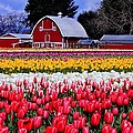Skagit Valley by Benjamin Yeager