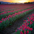 Skagit Valley Blazing Sunrise by Inge Johnsson
