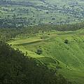 Skc 3566 The Gamut Of Green by Sunil Kapadia