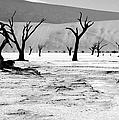 Skeleton Forest by Aidan Moran