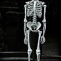 Skeleton New York City by Garry Gay