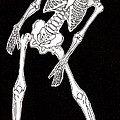 Skeleton by Oleg Konin