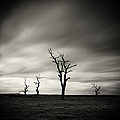 Skeletons by Simone Byrne Photography
