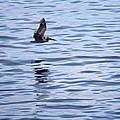 Skimming The Water by Joe Darin