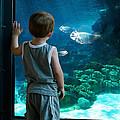 Skinny Fish by Rick Mosher