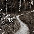 Skinny Trails by Marilyn Hunt