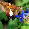 Skipper by Optical Playground By MP Ray