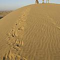 Skn 0965 This Way We Climbed by Sunil Kapadia