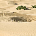 Skn 1408 The Smooth Dunes by Sunil Kapadia