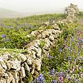 Skomer Wildflowers by Anne Gilbert