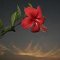 Skc 0452 Hibiscus 3 by Sunil Kapadia