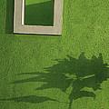 Skc 0682 Nature In Shadow by Sunil Kapadia
