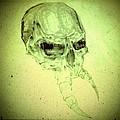 Skull by Charlie Mcginness