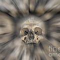 Skull - Fear And Trembling  by Michal Boubin