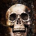 Skull In Earth by Amanda Elwell