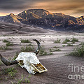 Skull In The Desert by Jerry Fornarotto