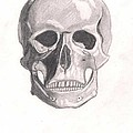 Skull by Jessica Phillips-Hight