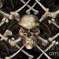 Skull N Bones by JQ Licensing