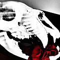 Skull Rose by Abby Kirsch