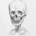 Skull Study by Irina Sztukowski