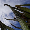 Sky Cactus by Mark J Dunn
