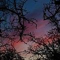 Sky In Blue And Magenta by Lezlie Faunce
