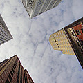 Sky Scrapers by Donna Blackhall