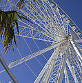 Sky Wheel And Palms by MM Anderson