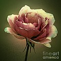 Skyblue Pink by RC DeWinter