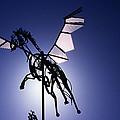 Skyhorse by Bernard  Barcos
