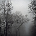Skyline Drive In Fog by Greg Reed
