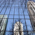 Skyscraper Reflections - Charlotte Nc by Shelia Kempf