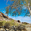 Slanted Rocks And Sycamore Tree  In Andreas Canyon In Indian Canyons-ca by Ruth Hager