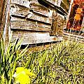 Slash Of Spring by Ciara Stumm