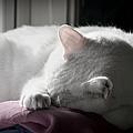Sleep by Mary Zeman